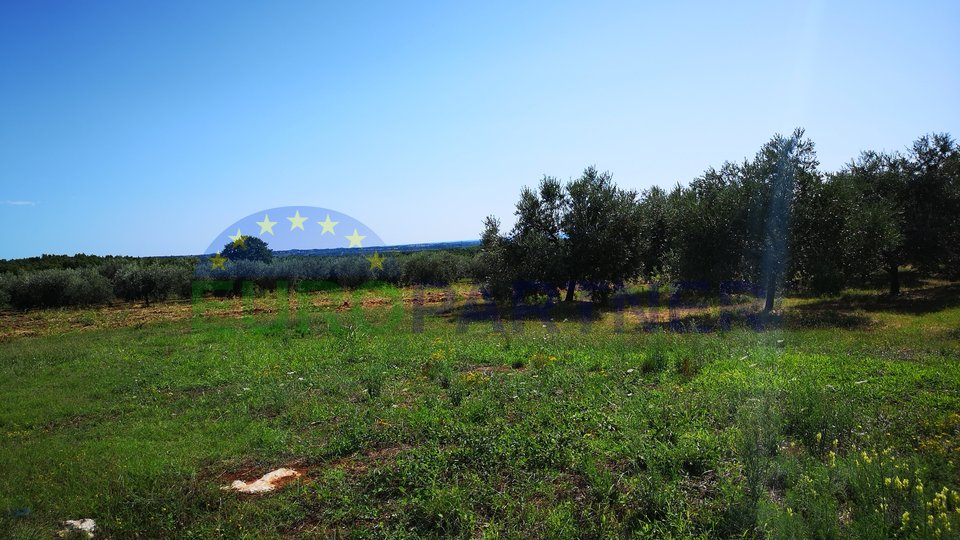 Agricultural land with sea view and olive grove
